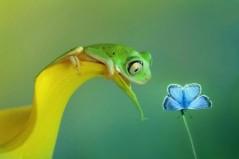 macro photo la petite grenouille emblème de Sans a priori 06.11.2015