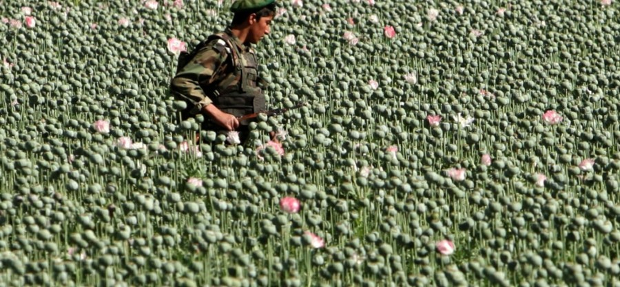 Soldat-Afghan-Dans-un-Champ-de-Pavot1-1728x800_c