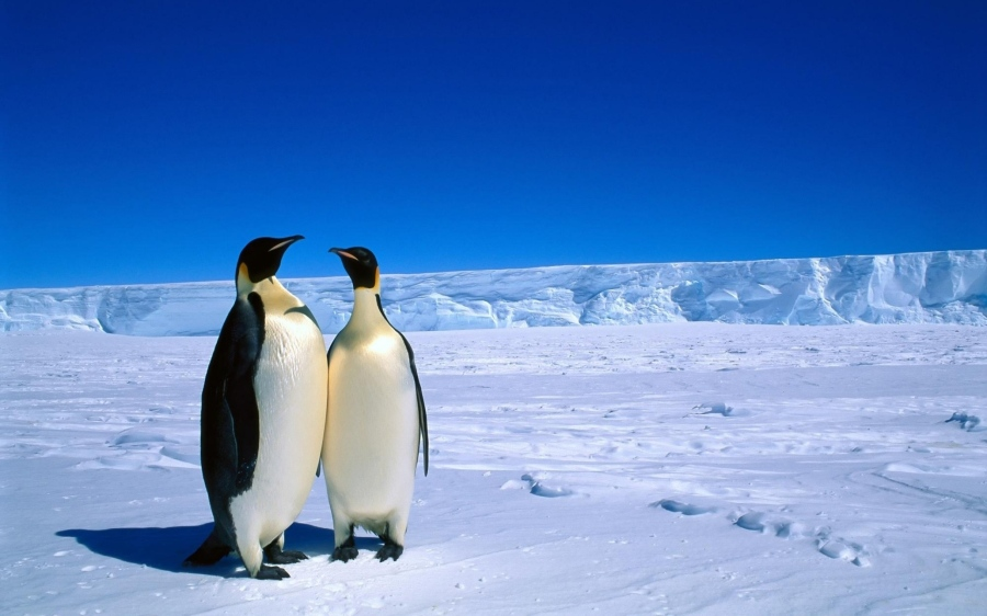Antarctique penguins_couple_snow_ice_antarctica_winter_52543_2560x1600