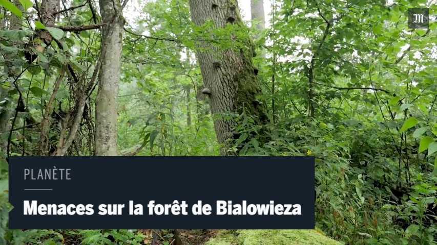 POLOGNE la forêt de Białowieża, rr33ks-HC