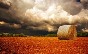 RUSSIE AGRICULTURE images