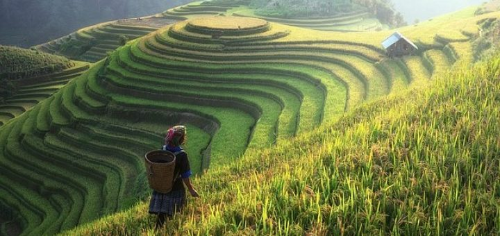 agriculture-china-720x340