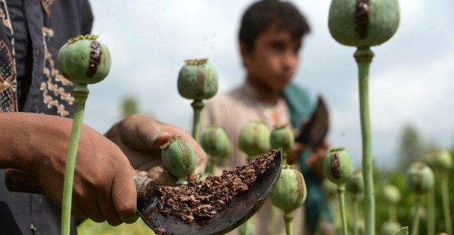 opium-afghan