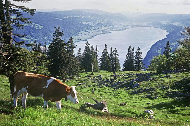 suisse agricole topelement
