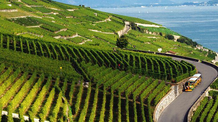suisse agricole vaudois 5844852.image