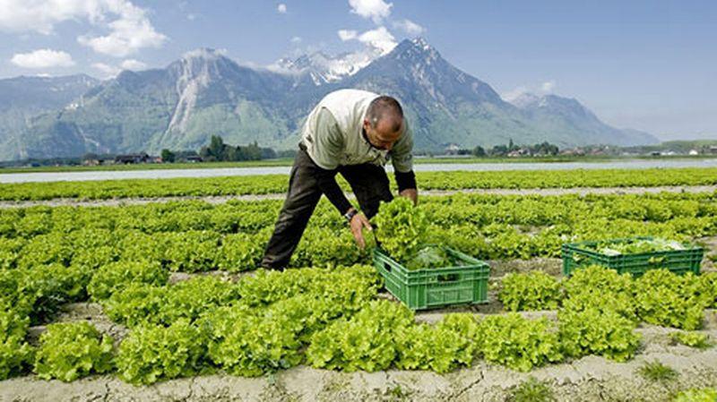 suisse agricole1021619.image