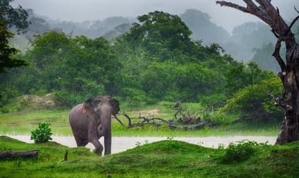 Sri Lanka magazine-cropped-shutterstock_126694037