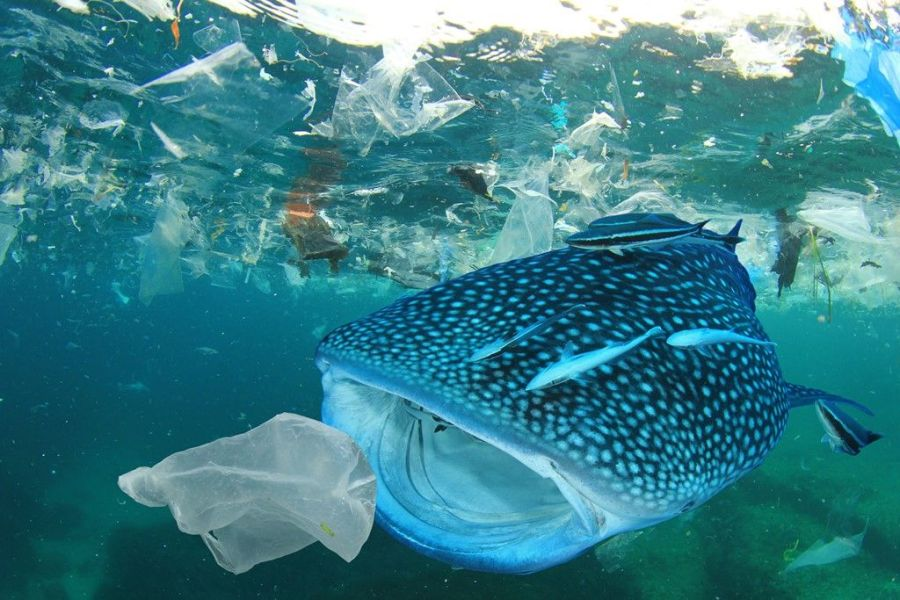 POLLUTION PLASTIQUE requin-baleine-plastique