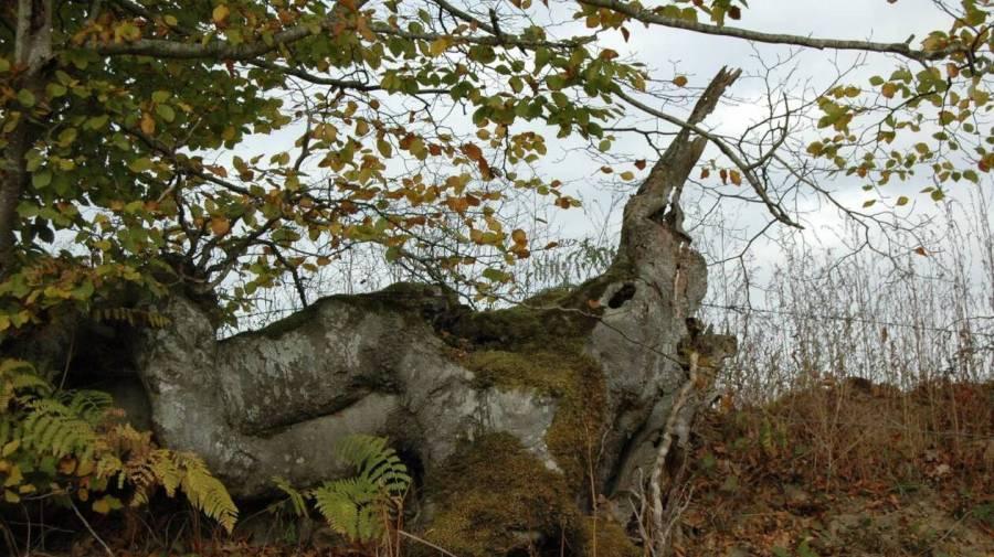 c705328b76b1960b768212bcc25db203-briouze-les-trognes-des-arbres-aux-mille-visages