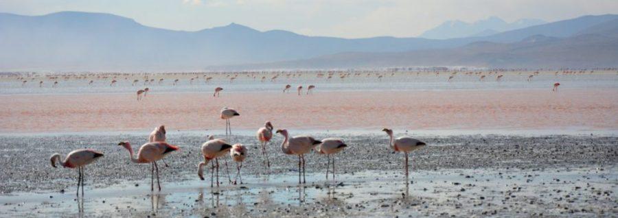 Bolivie_20000_lieux_sur_la_terre