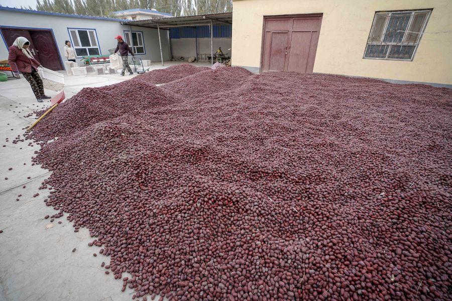 Des agriculteurs font sécher des jujubes dans une cour du district de Ruoqiang, dans la région autonome ouïgoure du Xinjiang (nord-ouest de la Chine), le 29 octobre 2019. (Photo Zhao Ge)138605851_15754702507781n