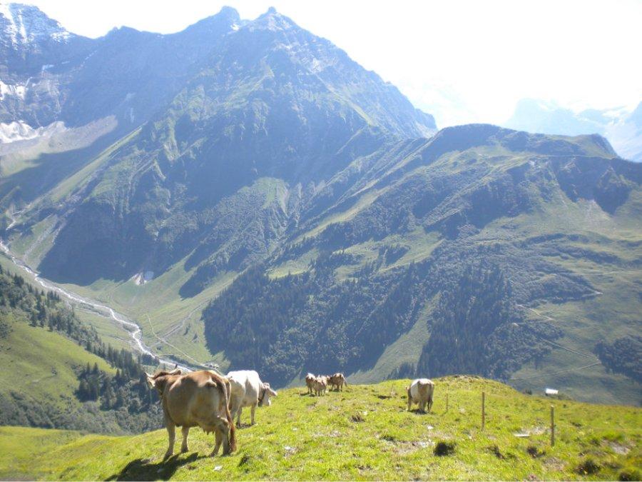 L'alpage Vorderdurnachtal. (photo www.durchnachtal.ch) ZF_20191203_26-27_Rettung_der_Alp_Vorderdurnachtal