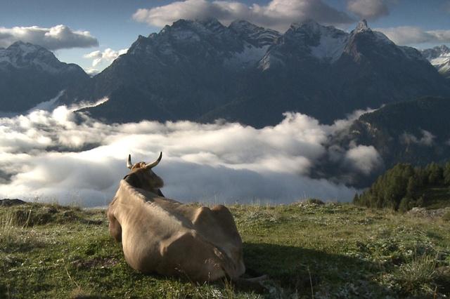 suisse alpage dokfilm-sommerzeit_pascale-gmuì-r_alp-laret-ftan-jpg