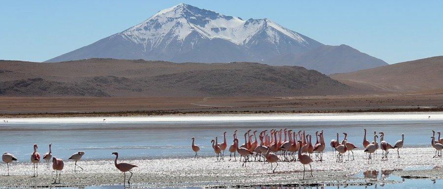 TIERRA_LATINA_-desert_du_Sud_Lípez-_Bolivie