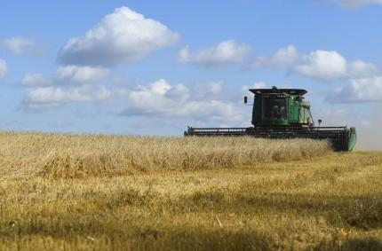 6022527 26.09.2019 Farmers harvest a summer wheat field, in Novosibirsk region, Russia. Alexandr Kryazhev / Sputnik