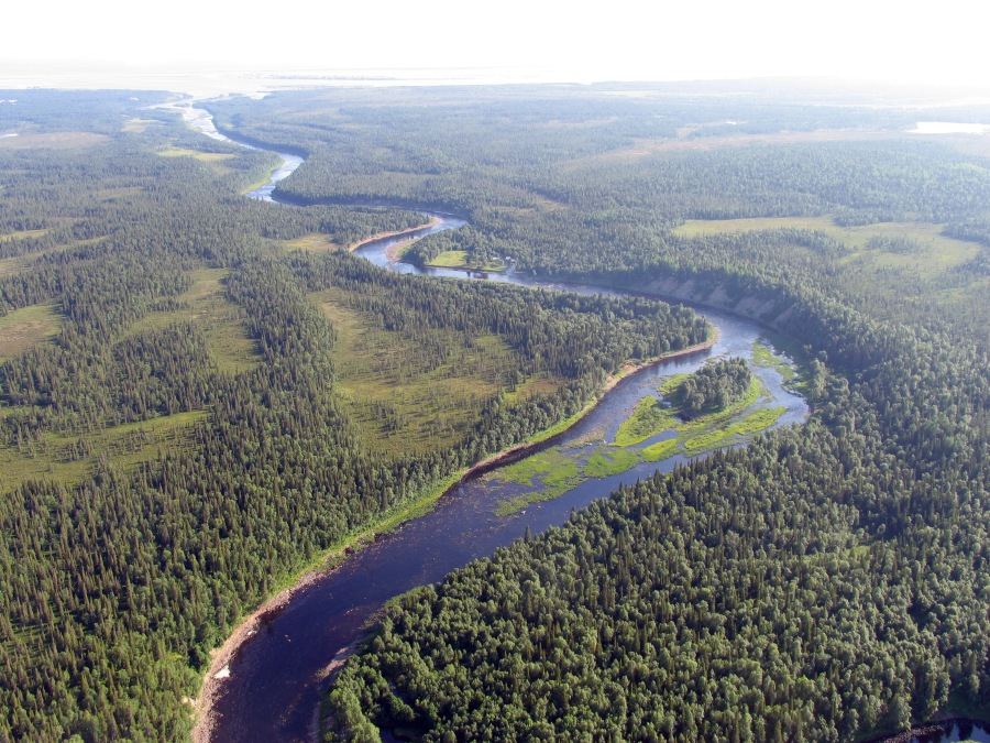 boreal_forest_article_july_2015_1
