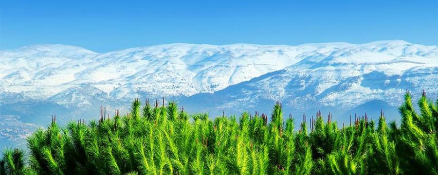LIBAN 432618