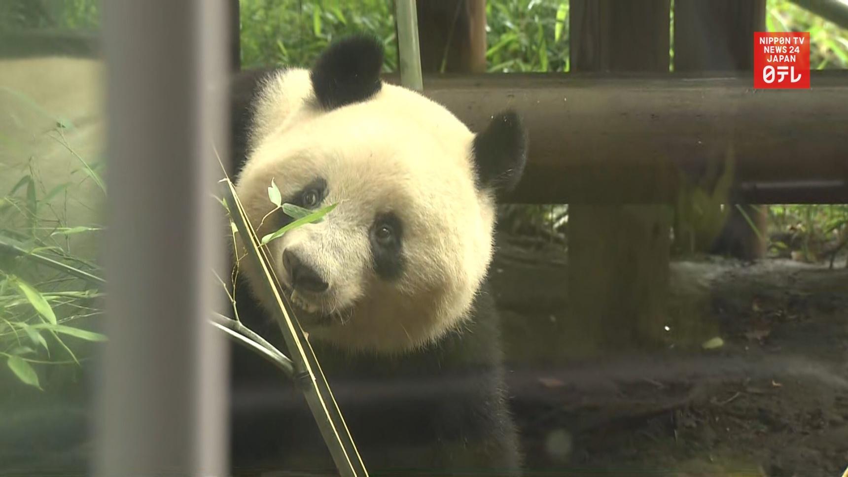 la star panda géant Xiang Xiang du zoo d'Ueno au Japon