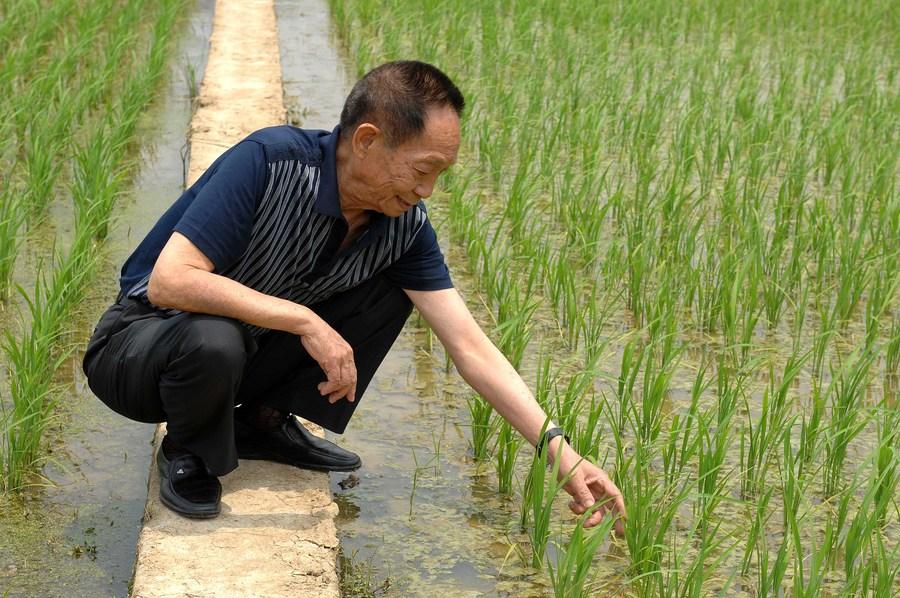 décès de Yuan Longping, scientifique chinois é